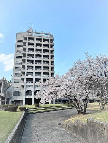 LCと桜.jpg