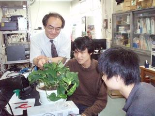 キノコ以外の植物も研究する平間教授